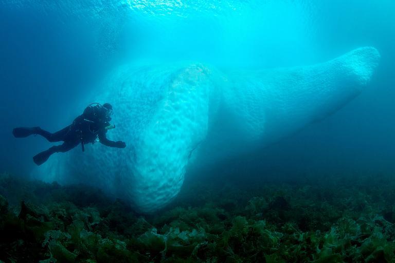 一名潛水夫游在格陵蘭庫魯蘇克(Kulusuk)的海底冰山旁。PHOTOGRAPH BY TOBIAS FRIEDRICH, ALAMY STOCK PHOTO