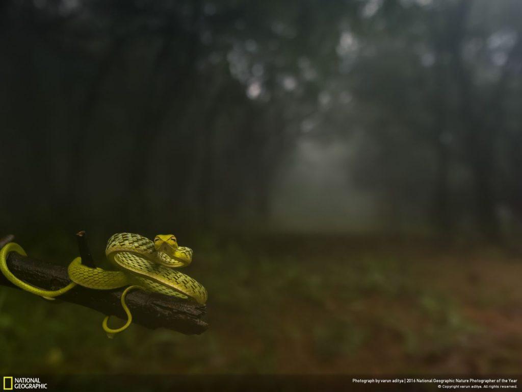 寒風、濃霧、細雨不斷的靜謐森林深處,突然間見到一條綠蔓蛇出現在眼前。Photo by varun aditya