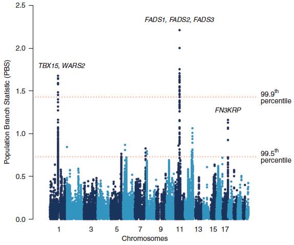 伊努特人與中國漢人和歐洲人相較最獨特的基因,位於第 11 號染色體的 FADS 排名第一,第 1 號染色體的 WARS2 和 TBX15 排名第二。(圖片來源)