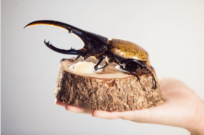 赫克力士長戟大兜蟲(Dynastes hercules)是全世界最大的甲蟲,原產於南美洲。雄蟲有犄角,可分為頭角與胸角,雌蟲則無。