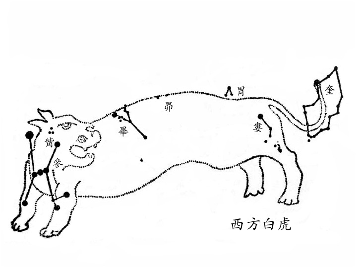奎、婁、胃、昴、畢、觜、參 (西方白虎),圖取自高魯的《星象統箋》。