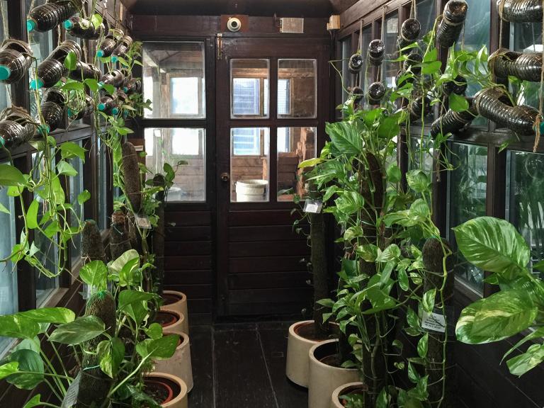 帕哈普爾商務中心的溫室主要栽種三種植物:檳榔樹、虎尾蘭和黃金葛。PHOTOGRAPH BY WENDY KOCH