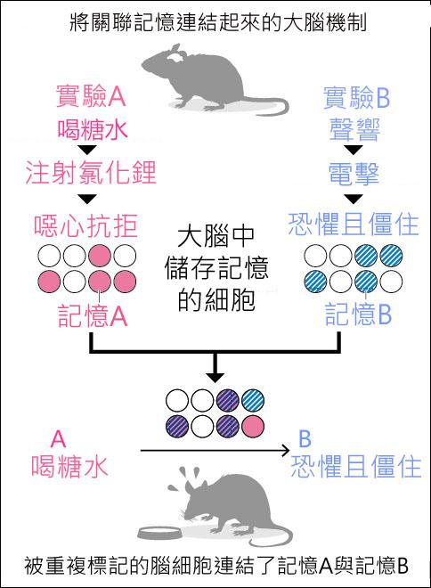 果殼網老鼠圖
