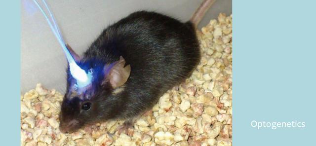 老鼠記憶實驗