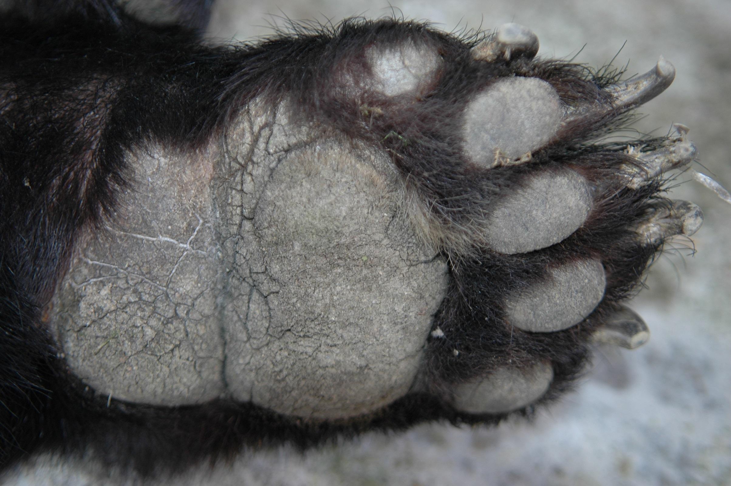 圖一熊腳印1