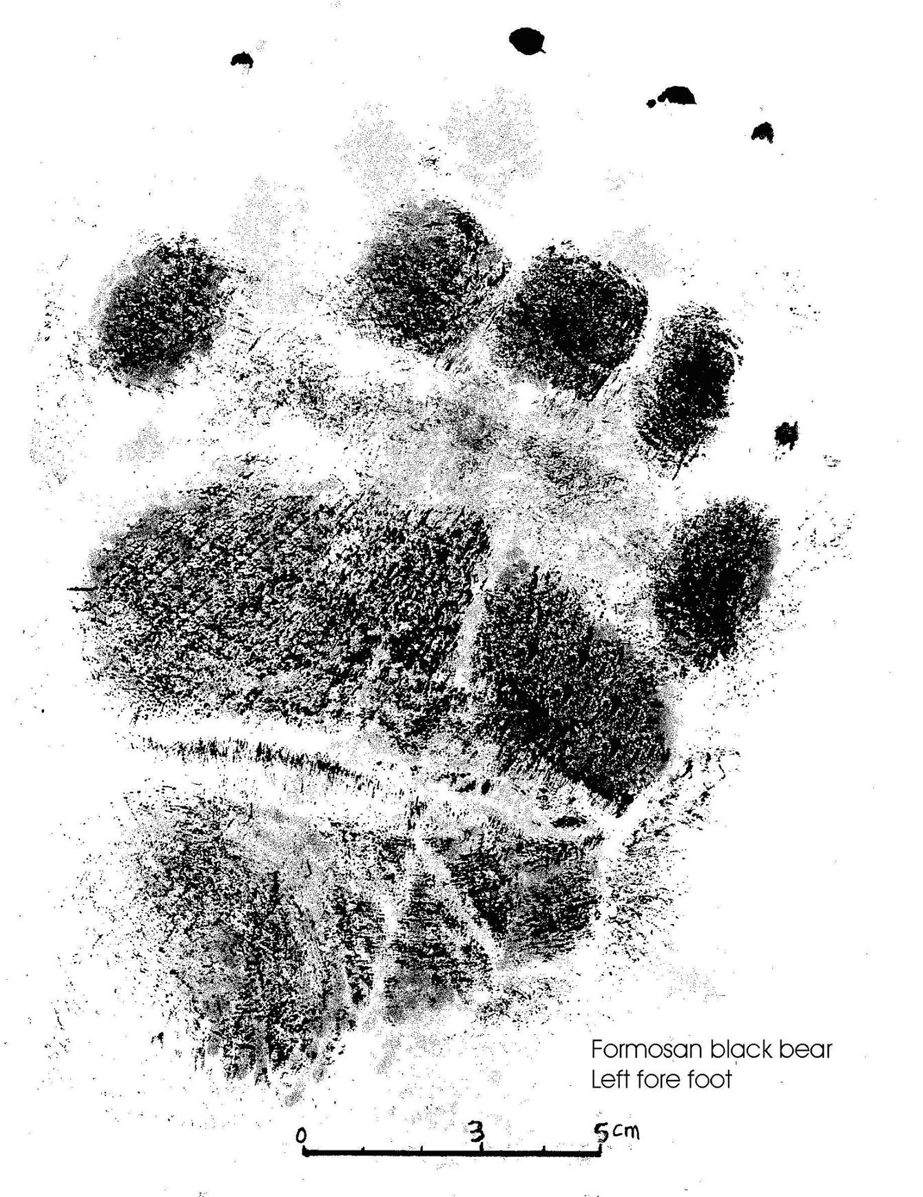 圖一熊腳印2