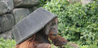 動物使用工具的差異