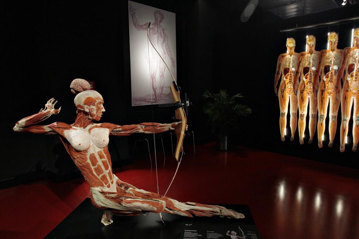 塑化生物博物館
