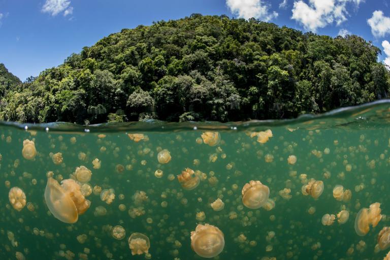 帛琉最大的觀光勝地