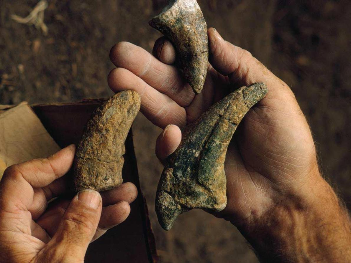 恐龍爪化石