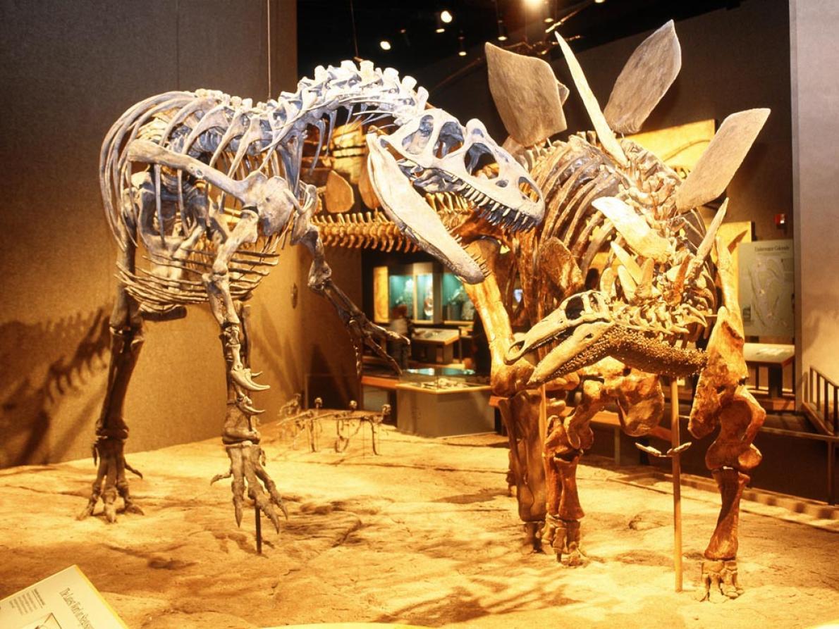博物館裡展示的恐龍