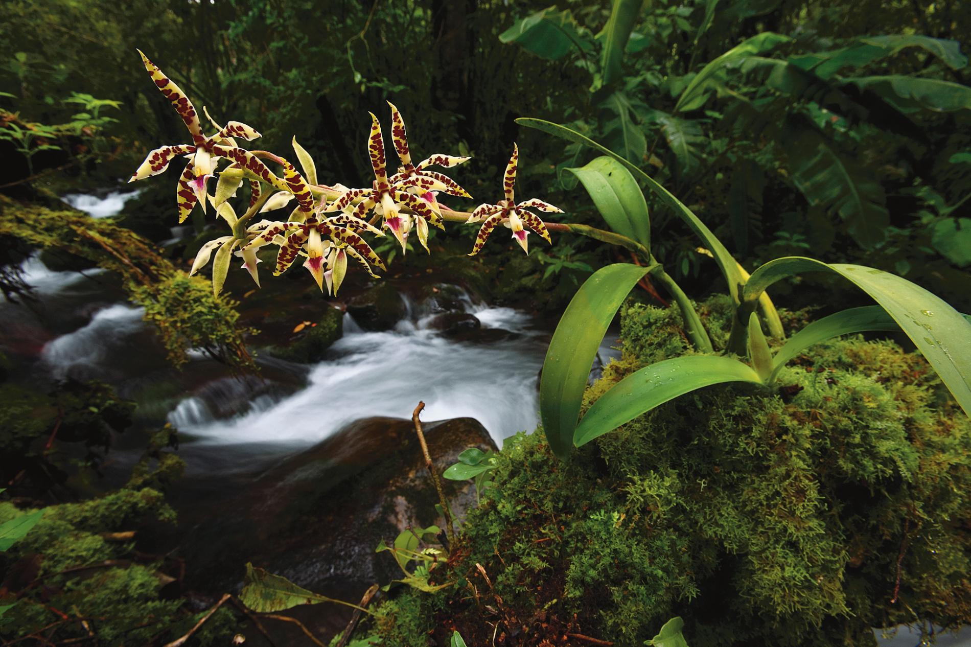 巴拿馬的章魚蘭