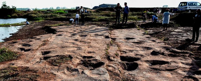 臨沂新發現的恐龍足跡點,有上千個足跡,這些足跡至少由7種不同的恐龍留下。圖片來源:Science原文陸勇