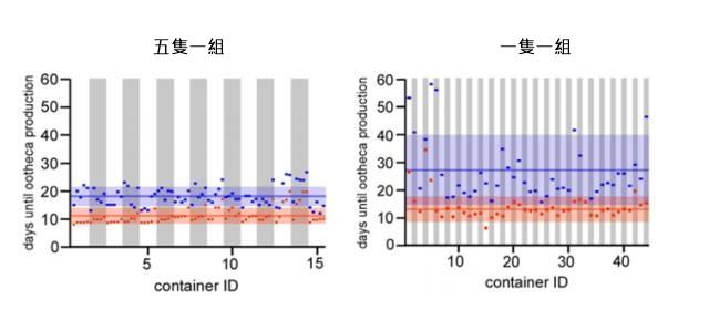 五隻一組的雌性蟑螂(左)生產第一個卵鞘(紅線)和第二個卵鞘(藍線)的時間比單個雌性(右邊)的時間短很多。圖片來源:參考文獻[2]