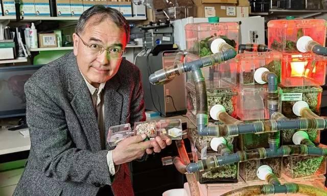 史密森尼國家自然歷史博物館(Smithsonian's National Museum of Natural History)的昆蟲學研究員泰德·舒爾茨(Ted Schultz)站在一個「農耕水平很高」的「高級」 植菌螞蟻的蟻穴旁,他手裡拿的是另一種「農耕水平不高」的「低級」 植菌螞蟻的蟻穴。真菌培植水平很高的螞蟻通常擁有更龐大、更複雜的社會,它們種植的也是經過馴化、只有依靠螞蟻才能生存的真菌「作物」。圖片來源:James DiLoreto, Smithsonian