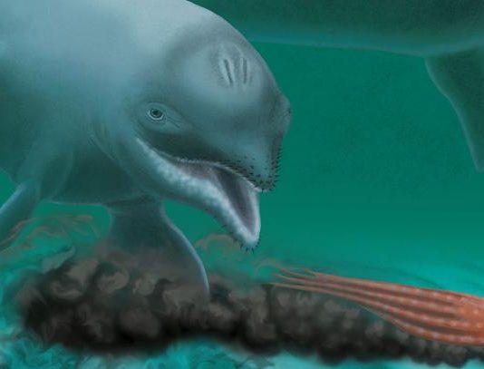 化石海豚在淺海