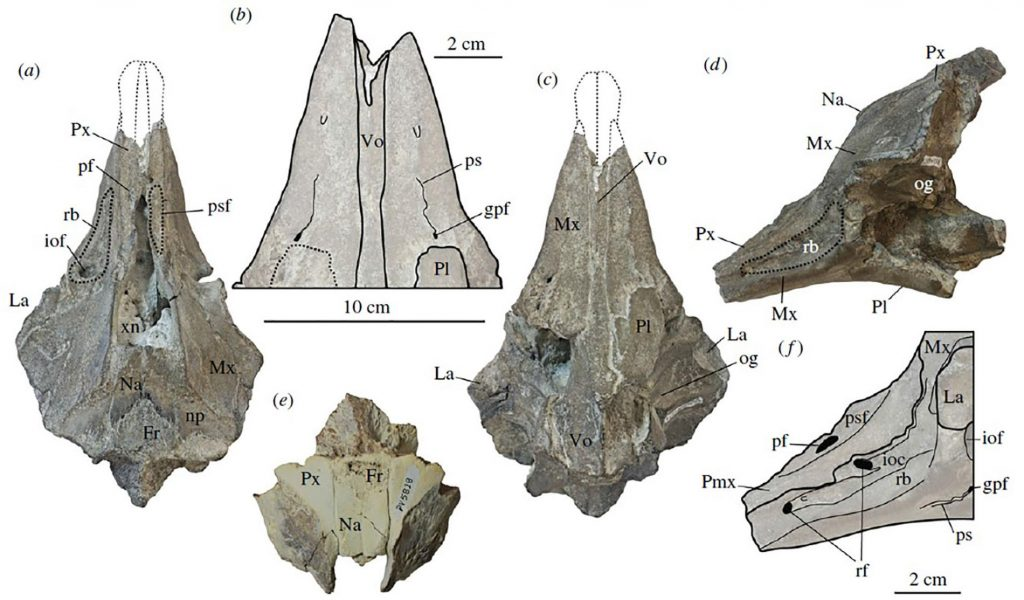 海豚化石圖片