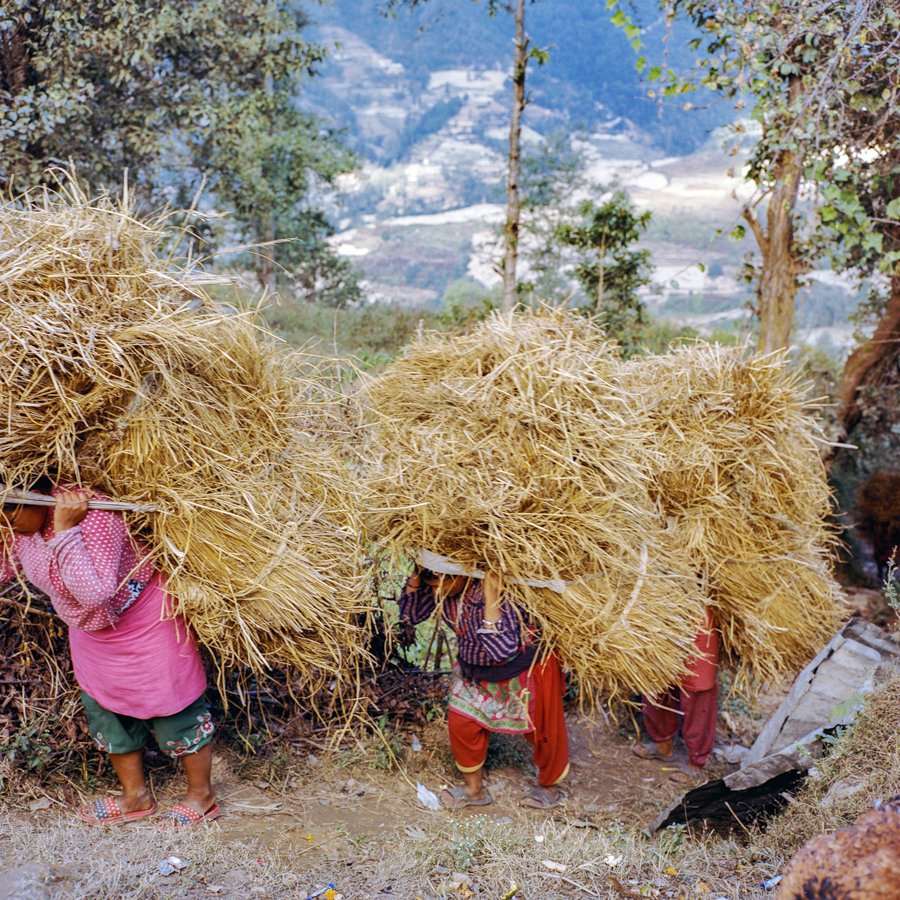 Dalit women carry grass through the village of Nagarkot, Nepal.