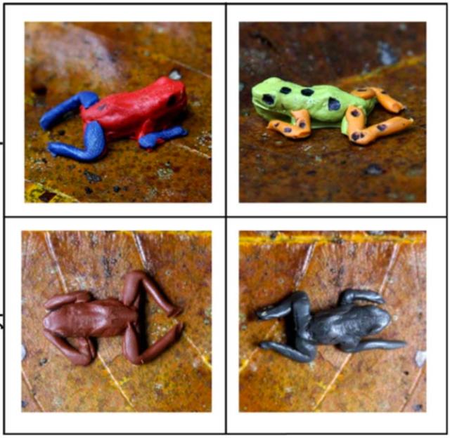 研究者們用來進行研究的橡皮泥青蛙。圖片來源:參考文獻[5]