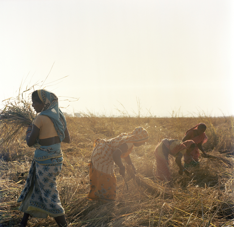 "Dec. 16 2016 - Dalit women work in the rice fields near Harirajpur, Odisha. ""We are involved in daily labor for only a few days a month and then we sit and wait. We have no work to support our families…Give me the work and I will do it,"" one woman said. These women were each paid 180 rupees for eight hours of labor, roughly $2.65 USD."