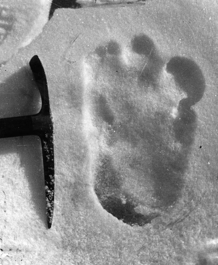 雪怪的腳印