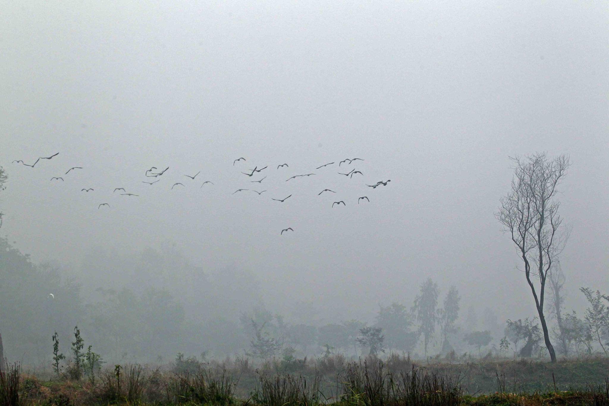 尼泊爾 恬靜農村