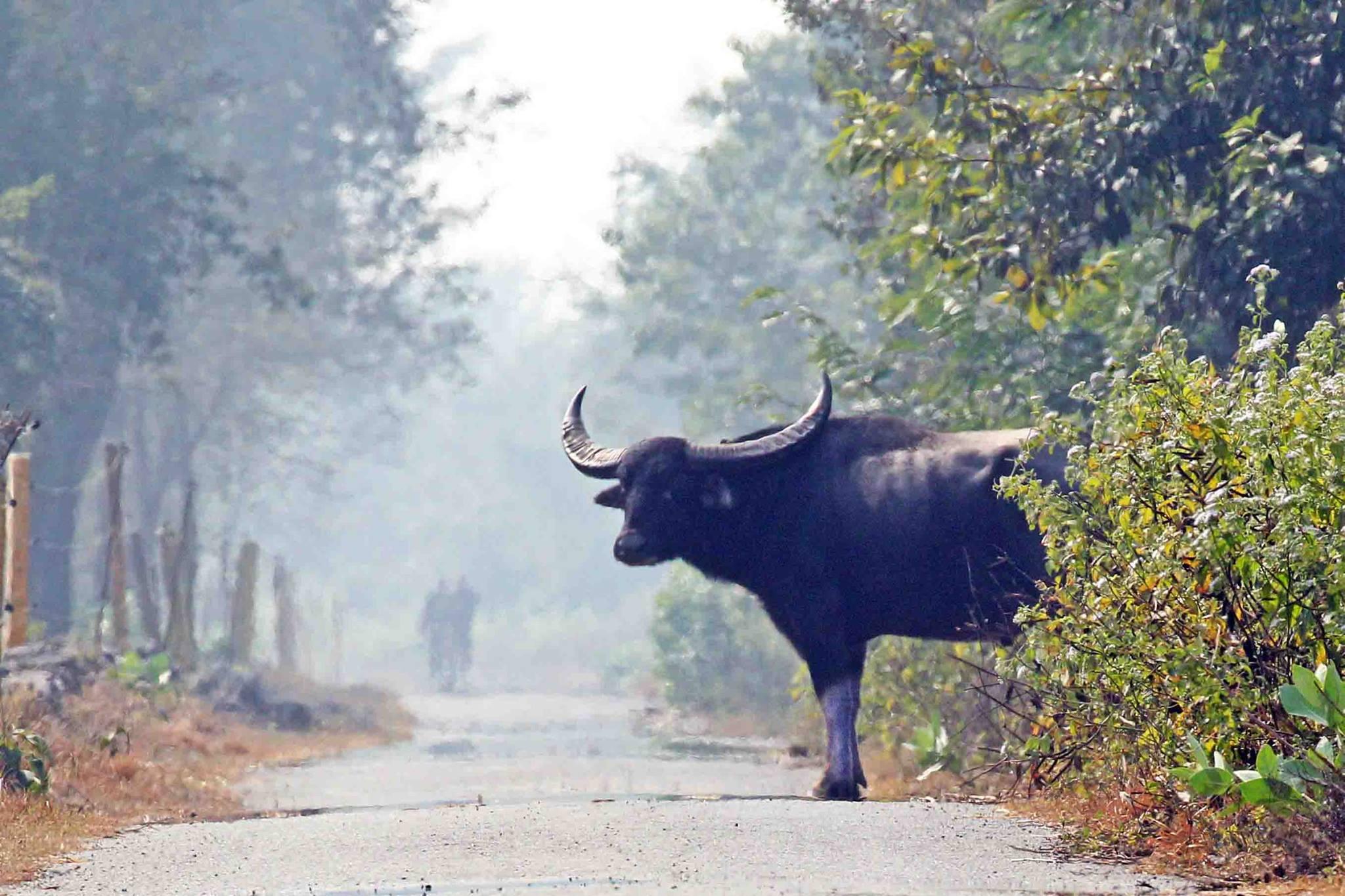 尼泊爾 荒野的呼喚