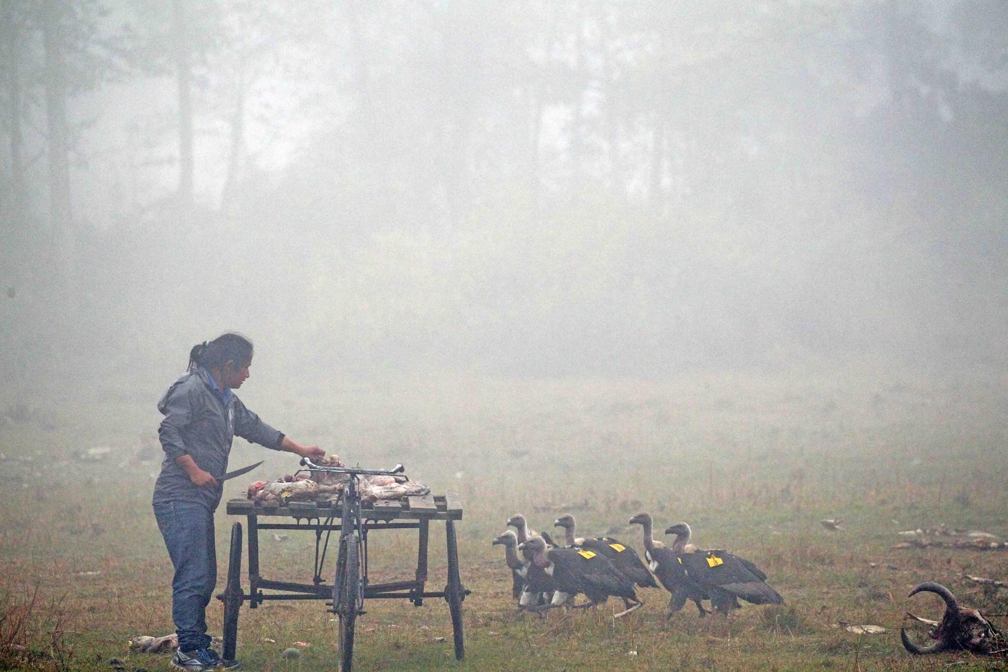 尼泊爾 猛禽餐廳
