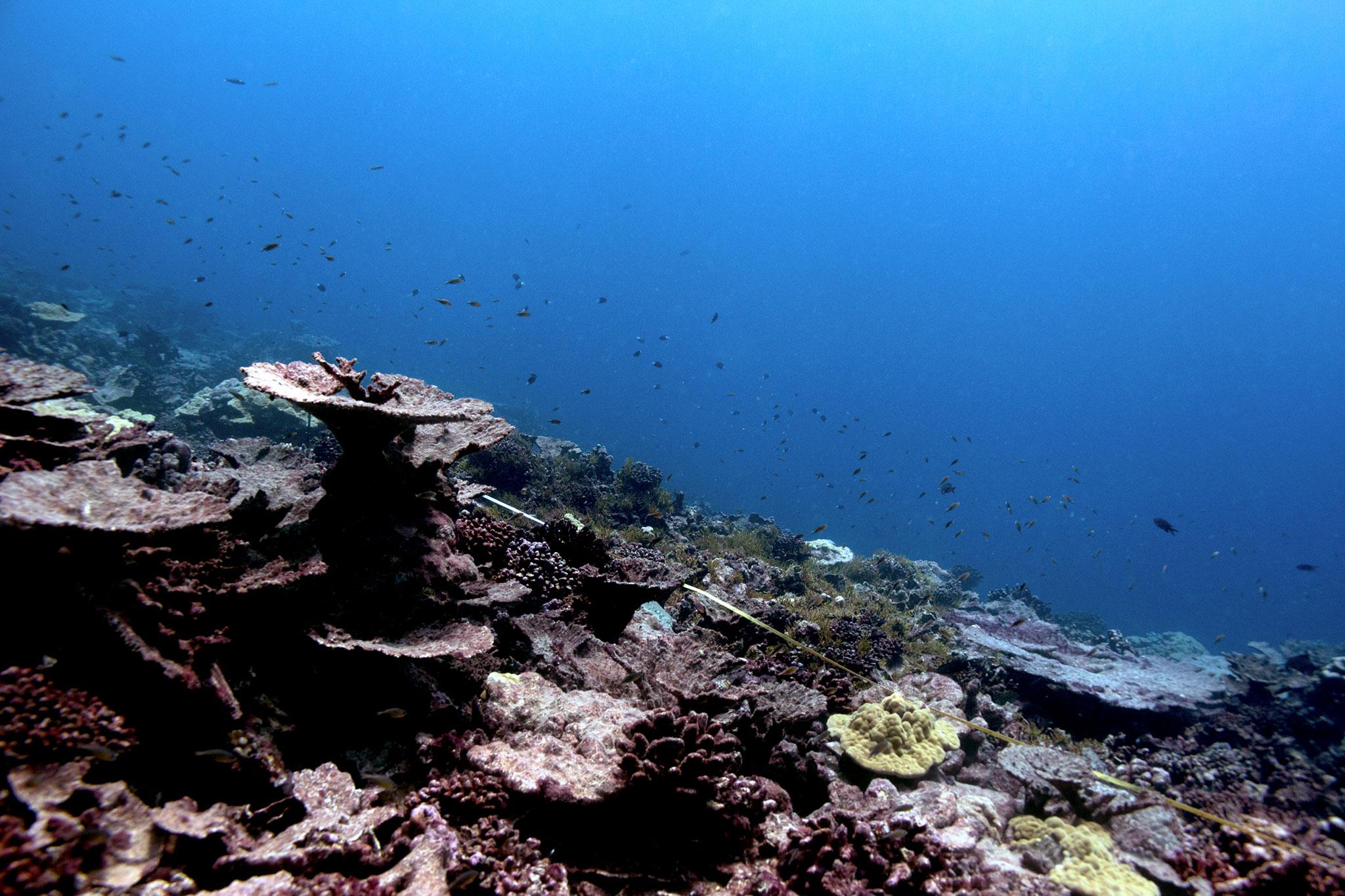 吉里巴斯珊瑚白化
