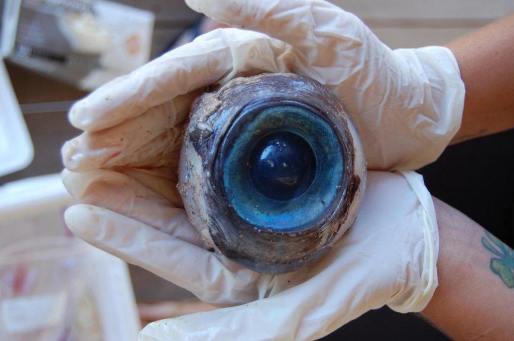 神秘的巨大眼球